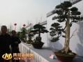 首个川派盆景传承基地挂牌 小盆景成就十亿产业