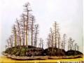 树桩盆景怎样分类的3个方法 图片