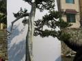 金华:花木盆景小镇 富有禅意的生活