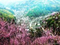 安徽歙县卖花渔村盆景俏销海内外市场(图)