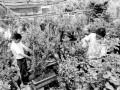 安徽铜陵:苗农互联网上卖盆景
