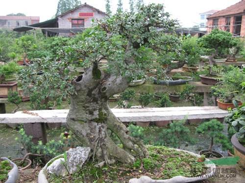 """安徽池州:农民""""玩转""""电子商务 网上销售苗木盆景"""