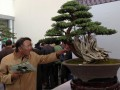 盆景究竟如何制作?周末来中国花木城长见识