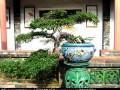 第六届中国花卉盆景展将在福建泉州举行