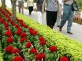 图文:福建举办花卉盆景博览会