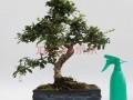 第五届福建省花卉盆景博览会9月在厦门举办