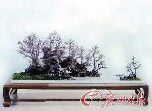 盆景大师黄就伟传承岭南盆景30年