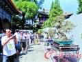 200盆岭南盆景京城斗艳(图)