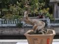 厦门:八旬老人展示上乘盆景 文儒讲坛连续两天开讲