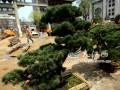 江西首个城区盆景园7月开放[图]