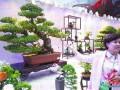 山东:花卉盆景大赛77个作品获奖 在时尚花艺馆展出