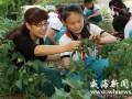 山东柳林:种植盆景蔬菜(图)
