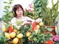 山东乳山:水果盆景渐入花卉市场