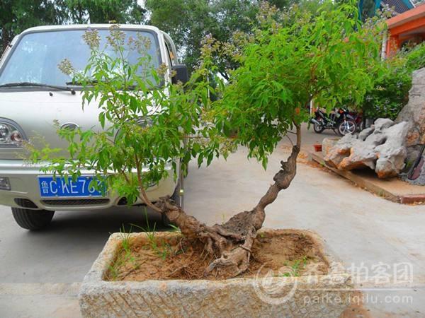 山东临沂举行盆景博览会