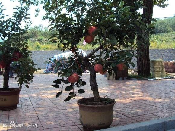 山东盆景赏石雕塑园博会