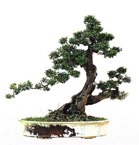 在顺德建立中国岭南盆景博物馆