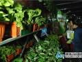 聊城:蔬菜盆景 能赏能吃