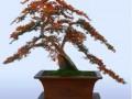 中州盆景学会第三届盆景展在河南镇平举行