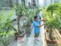 郑州市民花费30余万打造私家盆景园 成小区一景