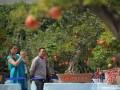 碧沙岗公园国庆期间免费欣赏郑州市第十届盆景展(图)