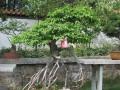 省盆景研讨会在平顶山市召开