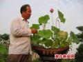 湖北:盆景荷花成云梦城乡居民的新宠(组图)