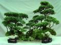 湖北建始三男子见财起意 盗窃10棵盆景景观树