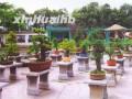 长阳高家堰盆景——中国园林艺术奇葩