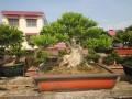 湖南:浏阳市花木盆景协会成立