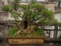 中国传统文化邵阳盆景赏石艺术会成立
