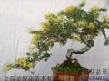 永州市东安县成立花卉盆景协会