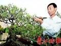 罗伟源3盆景揽回首届广东省盆景协会会员作品展1金2银