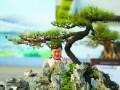 顺德陈村再次举办海峡两岸盆景展