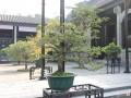 广东:我家小盆景 全城大花园