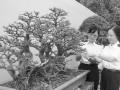 第十三届亚太盆景赏石大会首次在广州举行(图)