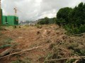 珠海盆景协会深夜被砸 事发地块存在用地纠纷
