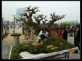 江门盆景协会