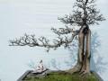 中山纪念堂下月展出800盆景