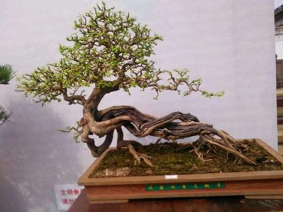 顺德陈村国际盆景雅石博览会 一块奇石600万元