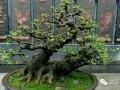 """广西柳州有""""世界第一天然大盆景""""的美誉"""
