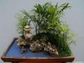 广西梧州市第十三届市花宝巾花暨盆景展即将举办