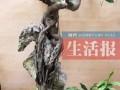 """广西:南宁退休大爷老有所乐 20年打造盆景""""群英会"""""""