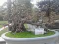 南宁盆景园