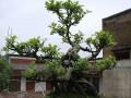 梧州市第十三届盆景展吸引不少市民前来观赏和拍照留念