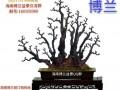 海南省第三届盆景评比展览