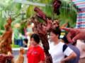 海南省第二届盆景评比展览10月1日上午在海口奥林