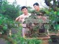 海南盆景艺术工作者刘传刚获得盆景艺术大师称号