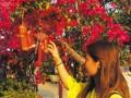 海南花卉大世界明年4000余种花卉盆景供消费者选购