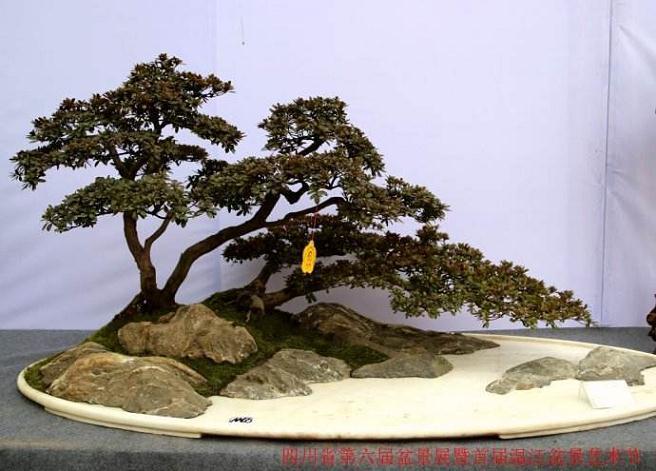 四川盆景艺术起源于汉代,唐宋时已很盛行