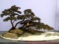 四川盆景艺术起源于汉代 唐宋时已很盛行